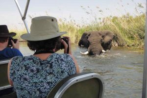 Close encounter with an elephant on a boat safari