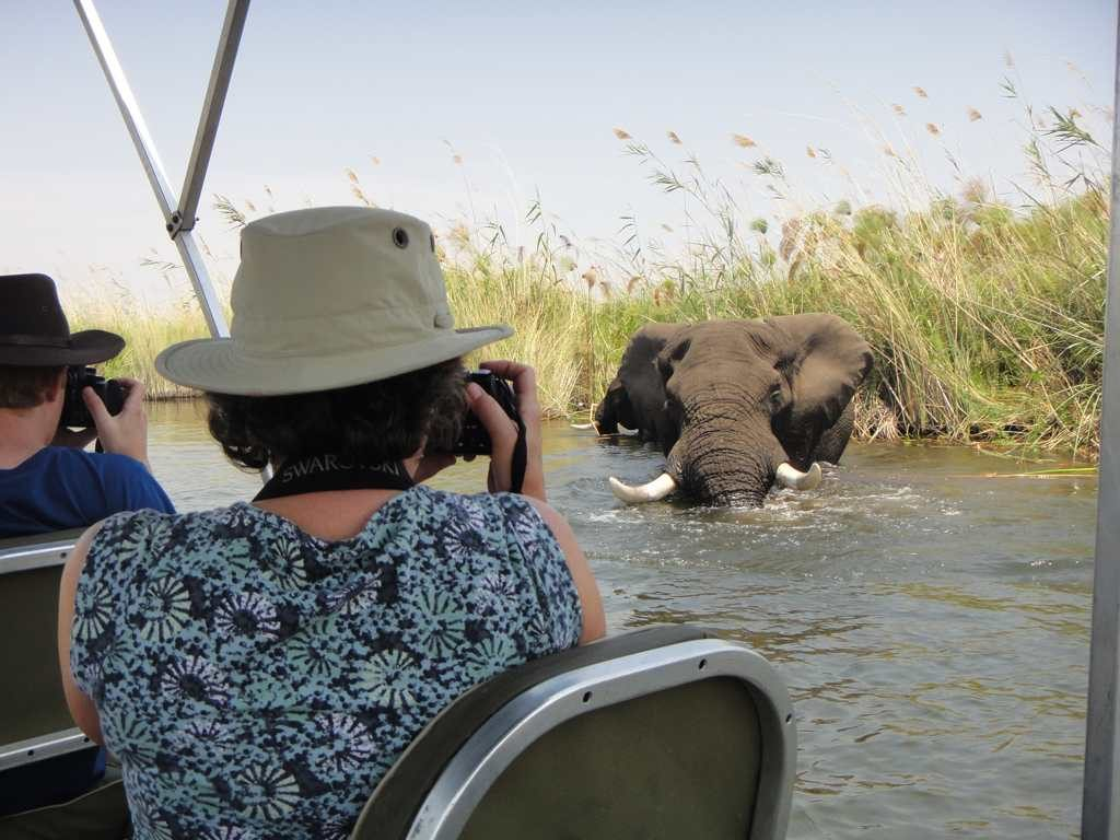Photographing elephant on Okavango Delta river cruise