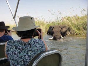 Photographing elephant on Okavango Delta river cruise