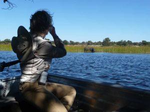 Hippo, Okavango Delta boat cruise