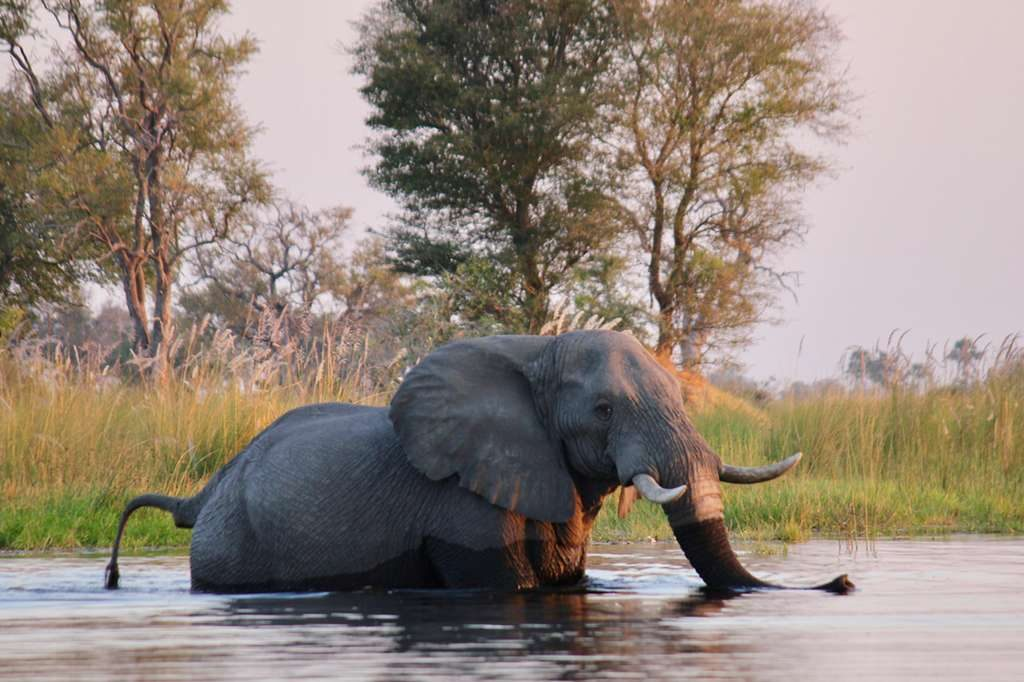 Elephant crossing the Okavango Delta