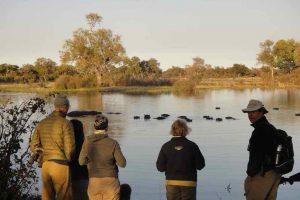 Watching hippo pod on walking safari