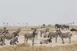 Wildlife congregated around a waterhole, Botswana